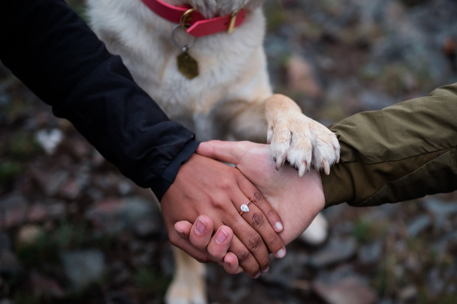 A couple hold hands, showing off the new engagement ring, and their dog puts her paw on top of their hands.